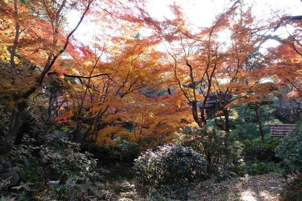 年末の風景_a0133859_15530576.jpg