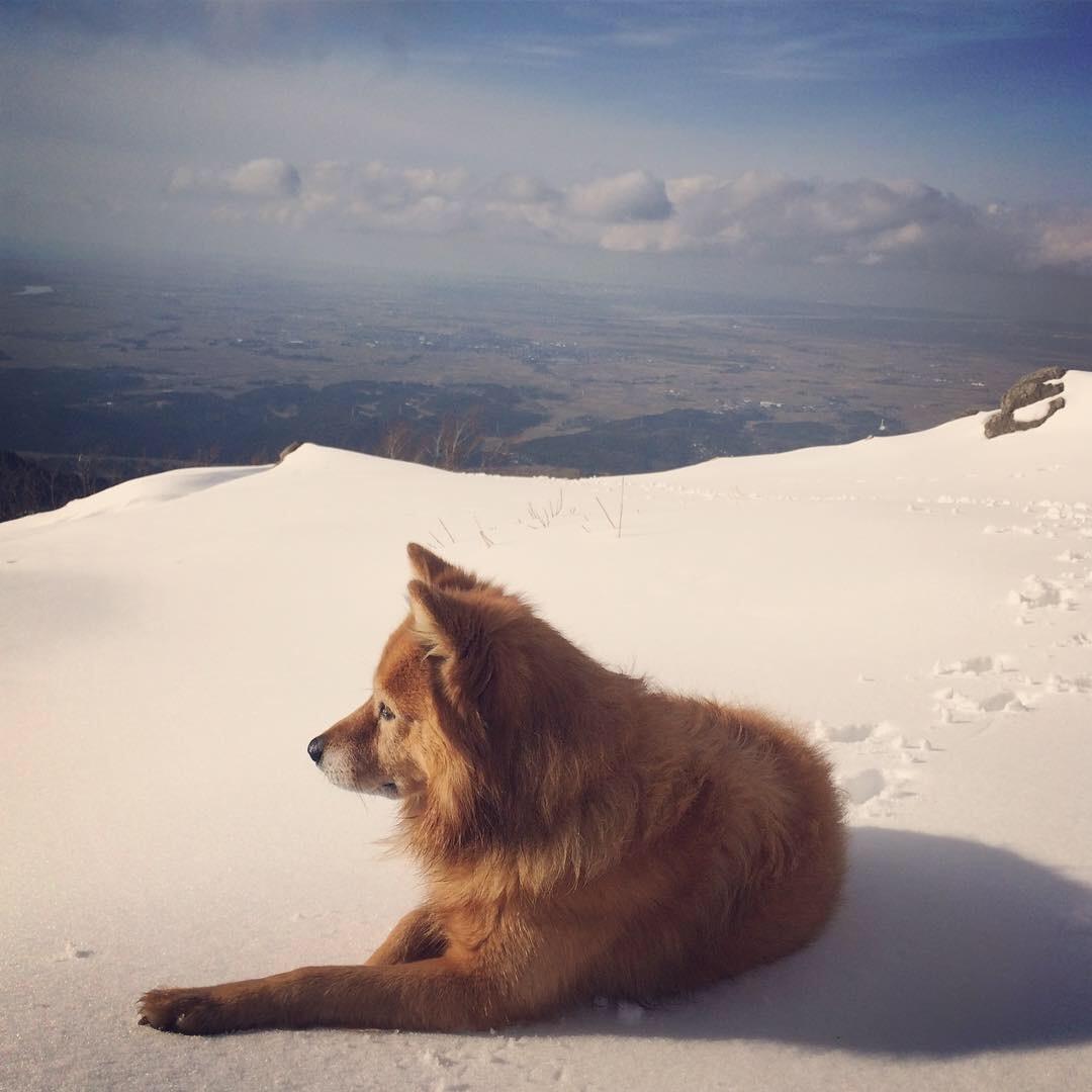 犬の「ろくさん」と五頭山へ_a0039568_21534104.jpg