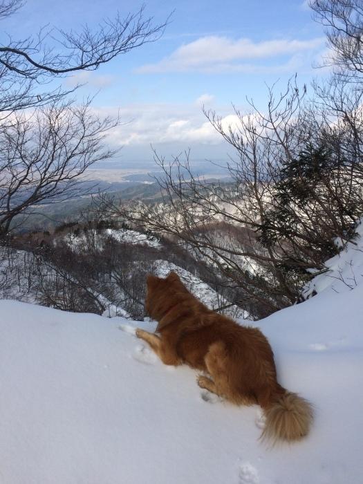 犬の「ろくさん」と五頭山へ_a0039568_22012745.jpg