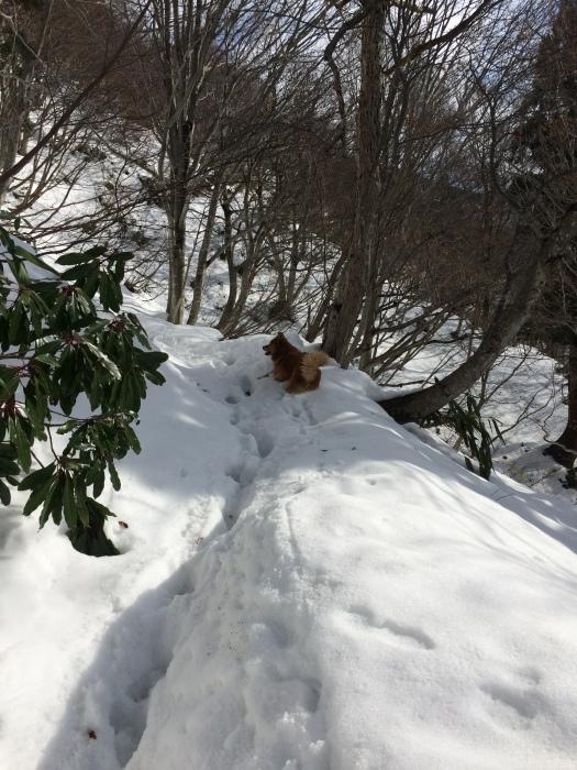犬の「ろくさん」と五頭山へ_a0039568_22025855.jpg