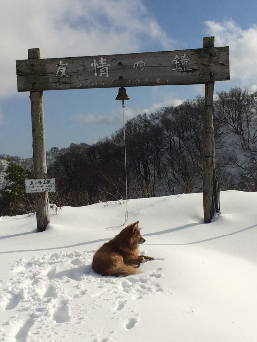 犬の「ろくさん」と五頭山へ_a0039568_22043557.jpg