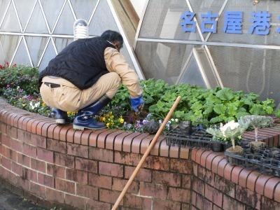 ガーデンふ頭総合案内所前花壇の植替えH30.12.17_d0338682_10203235.jpg