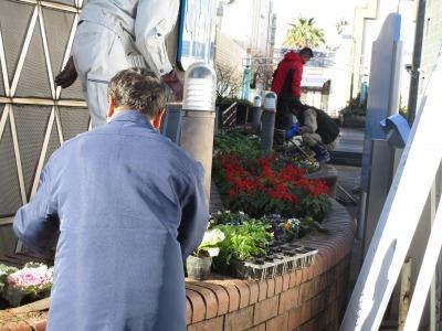ガーデンふ頭総合案内所前花壇の植替えH30.12.17_d0338682_10204072.jpg