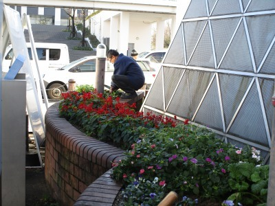 ガーデンふ頭総合案内所前花壇の植替えH30.12.17_d0338682_10204853.jpg