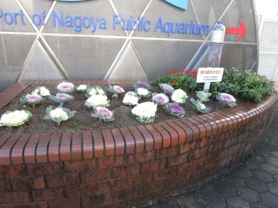 ガーデンふ頭総合案内所前花壇の植替えH30.12.17_d0338682_10255072.jpg