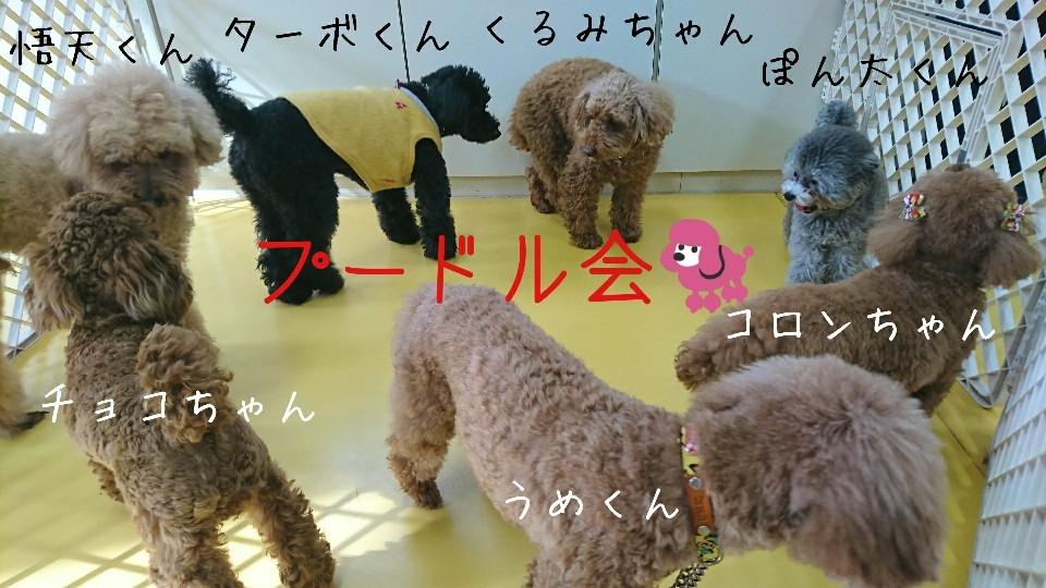 全員集合〜_f0357682_09081911.jpg