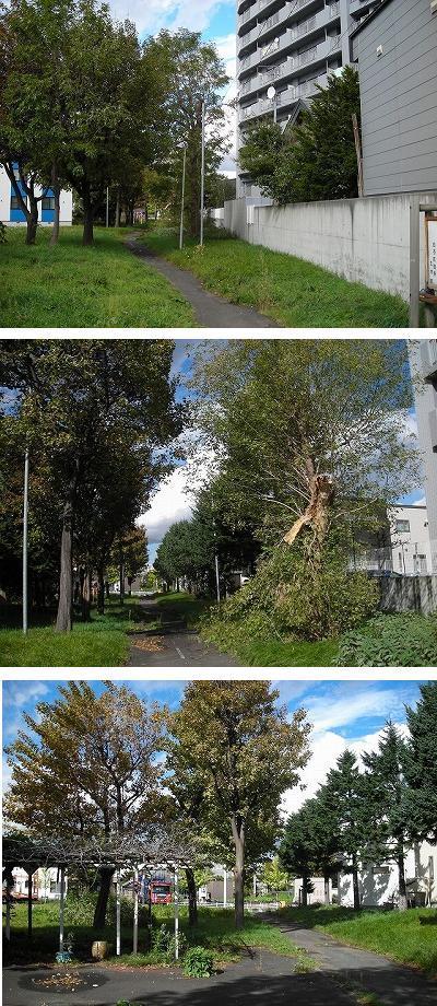 東札幌の公園ベルトを歩く(2)_f0078286_09450521.jpg