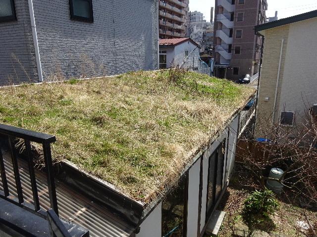 2018 屋上緑化の1年を振り返る_f0105112_18103670.jpg