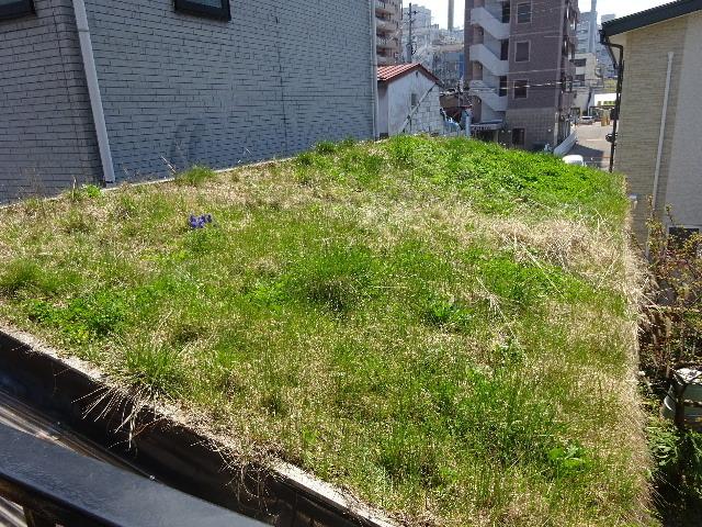 2018 屋上緑化の1年を振り返る_f0105112_18133527.jpg