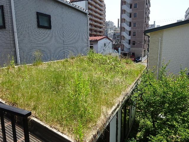 2018 屋上緑化の1年を振り返る_f0105112_18133535.jpg
