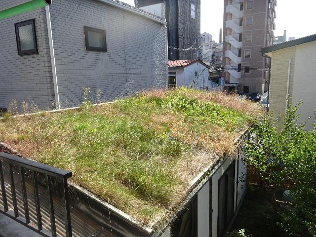 2018 屋上緑化の1年を振り返る_f0105112_18250034.jpg