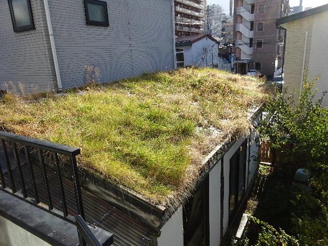 2018 屋上緑化の1年を振り返る_f0105112_18282317.jpg