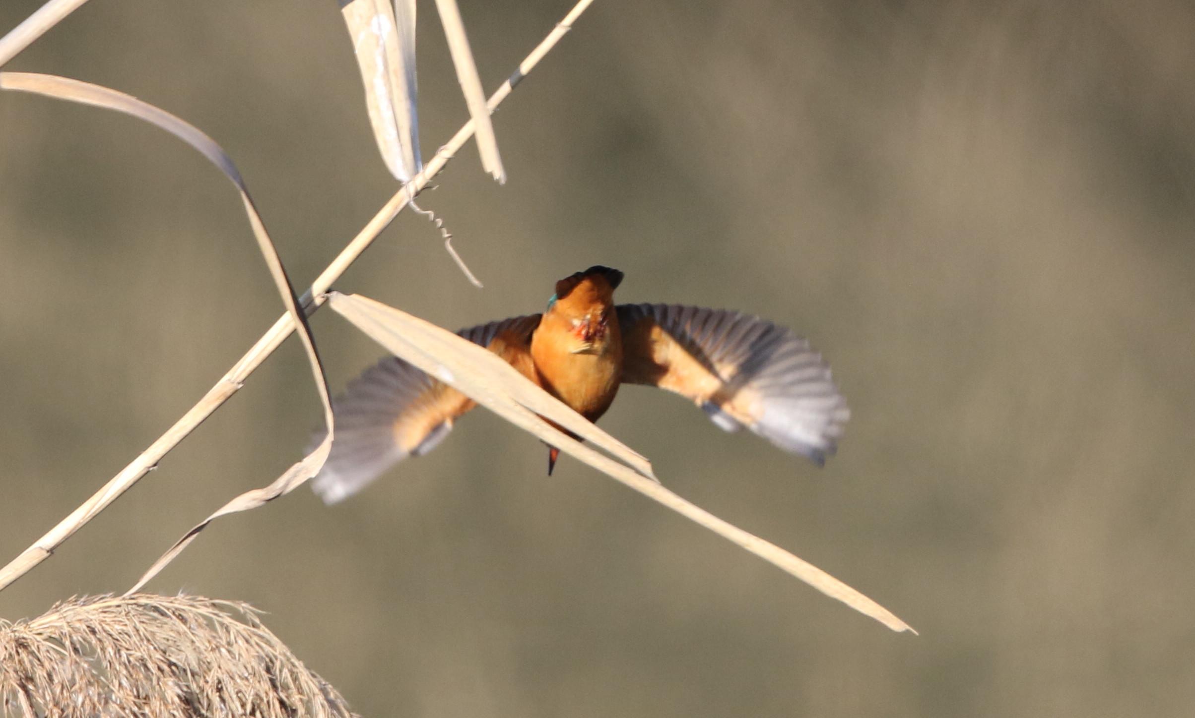目的の鳥には会えませんでしたが~~_f0239515_1820778.jpg