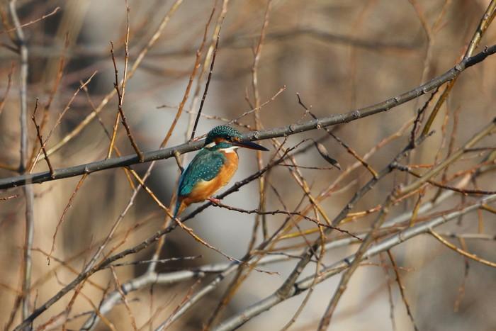 目的の鳥には会えませんでしたが~~_f0239515_18222259.jpg