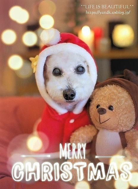 MERRY CHRISTMAS_d0083623_01301993.jpg