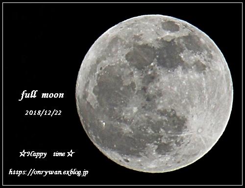 柚子と満月とおまけのリク♪_f0348032_19180408.jpg