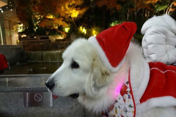 ワンダフル・クリスマス 梅田スカイビル ドイツクリスマスマーケット_d0145934_17151372.jpg