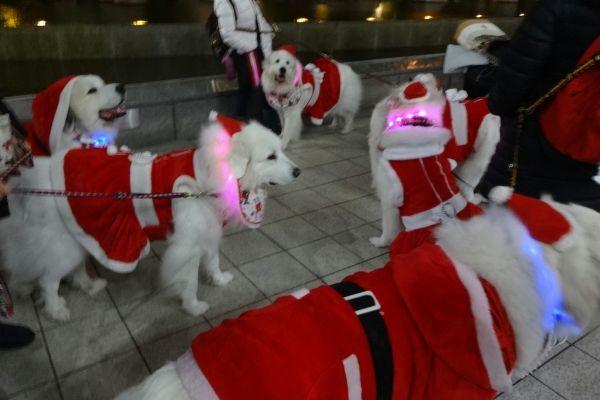 ワンダフル・クリスマス 梅田スカイビル ドイツクリスマスマーケット_d0145934_17152525.jpg