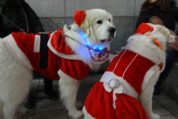 ワンダフル・クリスマス 梅田スカイビル ドイツクリスマスマーケット_d0145934_17153433.jpg