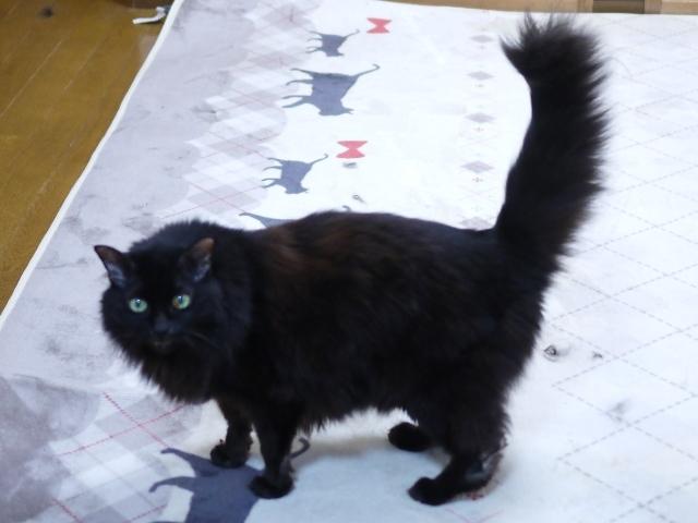 猫のお留守番 モコちゃん編。_a0143140_21485975.jpg