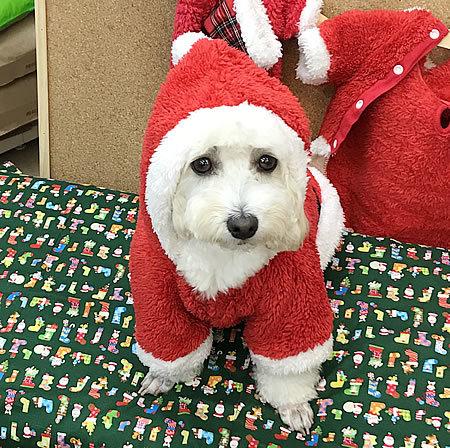 クリスマスコスプレ~!! その2_e0362456_21434800.jpg