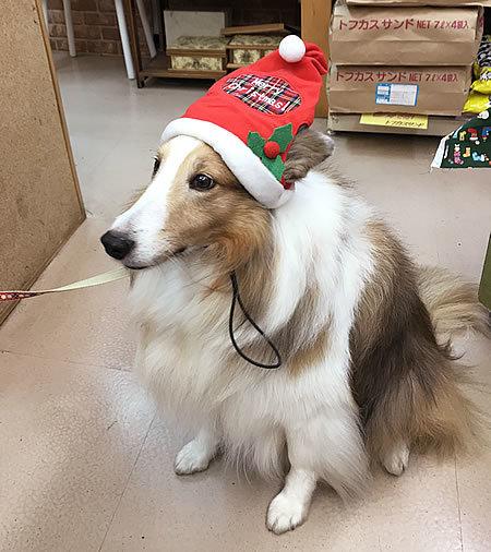 クリスマスコスプレ~!! その2_e0362456_21440203.jpg