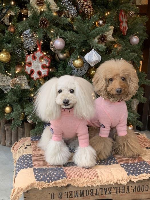 2018.12.22  メリークリスマス!! (今日は冬至)_a0083571_12383521.jpg