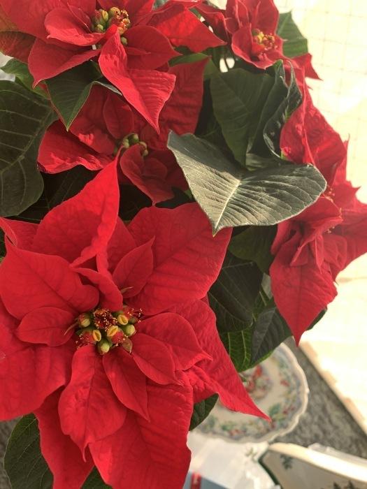 2018.12.22  メリークリスマス!! (今日は冬至)_a0083571_12384679.jpg