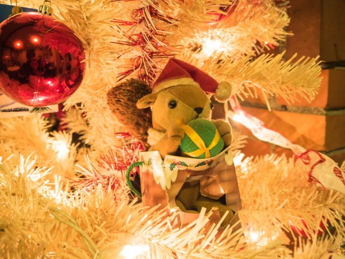 白いクリスマスツリーとエゾリス君(ホンモノ)がコラボ!_f0276498_14052510.jpg