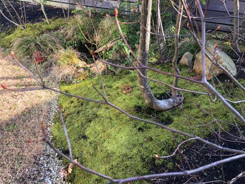 苔は冬至でも緑々_e0054299_14311160.jpg
