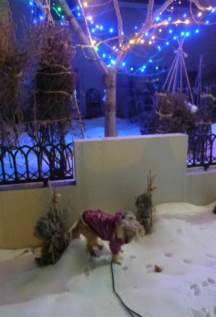 夜のお散歩はもっと寒い!/ It\'s more freezing on night walk !_e0120899_15103817.jpg