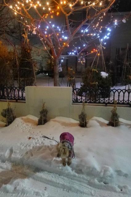 夜のお散歩はもっと寒い!/ It\'s more freezing on night walk !_e0120899_15161160.jpg