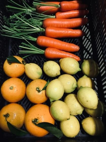 お野菜収穫_f0238106_22021912.jpeg
