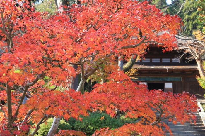 【三井寺】紅葉関西帰省 - 17 -_f0348831_00383776.jpg