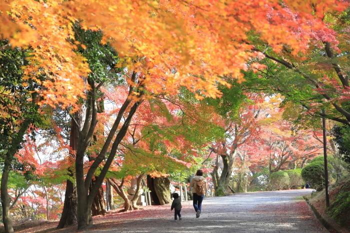 【三井寺】紅葉関西帰省 - 17 -_f0348831_00410763.jpg