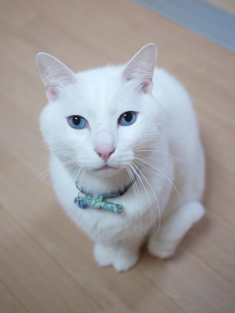 猫のお留守番 蒼也くん編。_a0143140_21555498.jpg