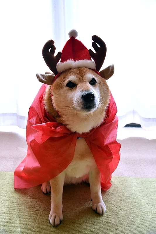 Christmas Eve_b0314043_17172723.jpg