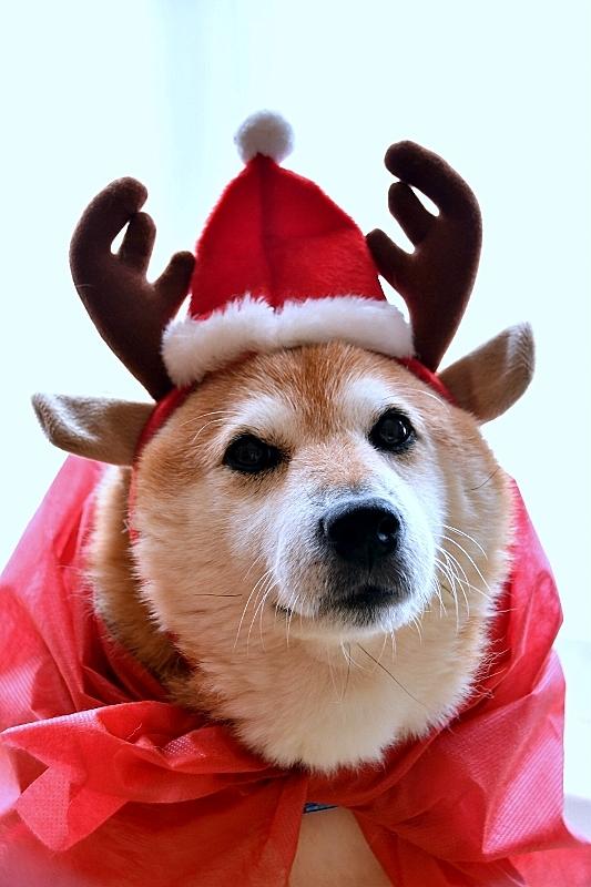 Christmas Eve_b0314043_17173812.jpg