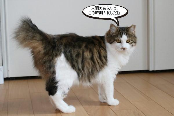 保護猫さん達、忙しい?!くないよね・・・_e0151545_17480102.jpg