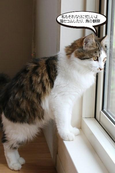 保護猫さん達、忙しい?!くないよね・・・_e0151545_17481271.jpg