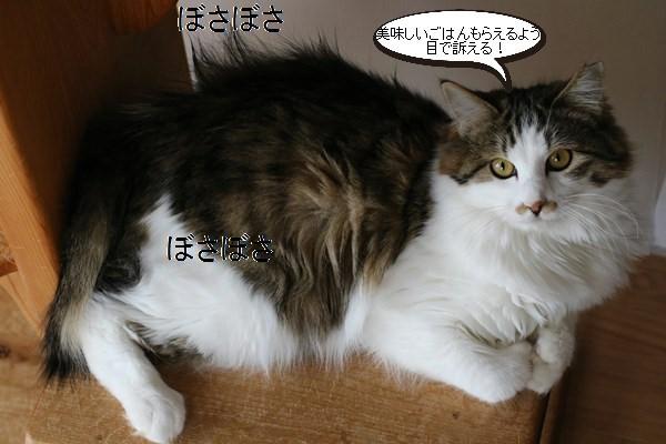 保護猫さん達、忙しい?!くないよね・・・_e0151545_17482591.jpg