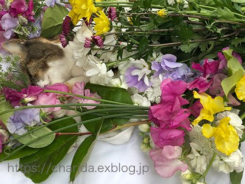 永眠 猫ちゃん_c0092152_21150358.jpg