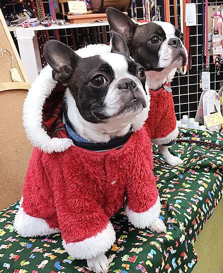 クリスマスコスプレ~ その3_e0362456_20064279.jpg