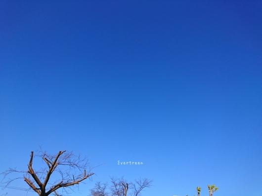 12/23(日)②        さんぽ病院うろこ雲。【12/21の事】_d0362666_20573073.jpg