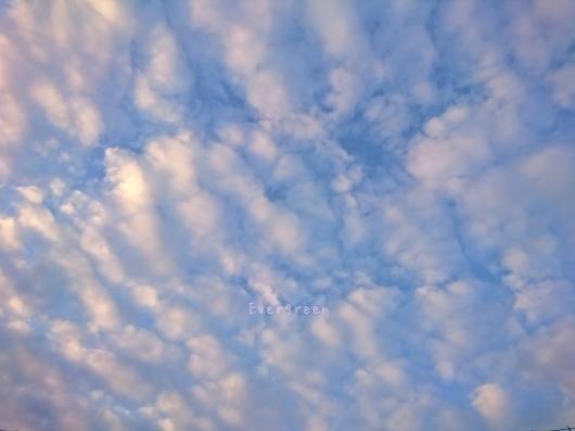 12/23(日)②        さんぽ病院うろこ雲。【12/21の事】_d0362666_20582189.jpg