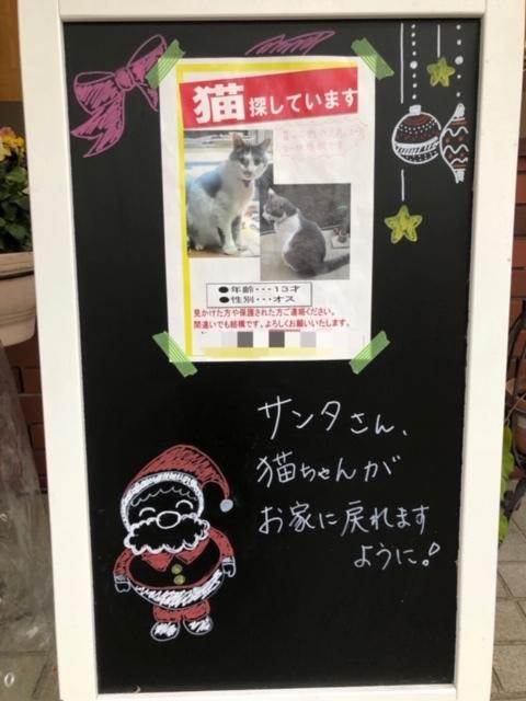 迷子の猫ちゃん_e0367571_22213446.jpg