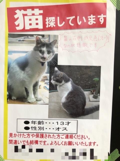 迷子の猫ちゃん_e0367571_22214830.jpg