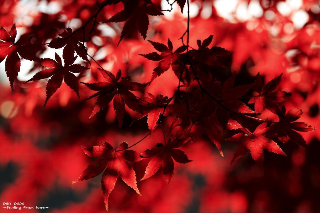 好きな色と_c0356480_08050531.jpg