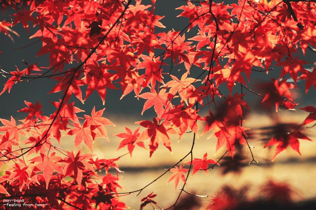 好きな色と_c0356480_08050696.jpg