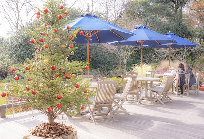石窯ガーデンテラスのクリスマス _b0145398_15564649.jpg